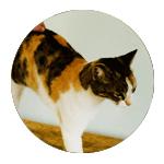 טיפול בחתולי רחוב - וטרינר בחיפה