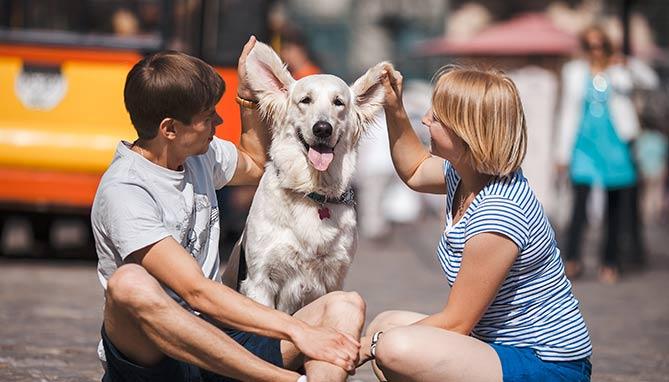 טיפול בכלב - וטרינר בחיפה