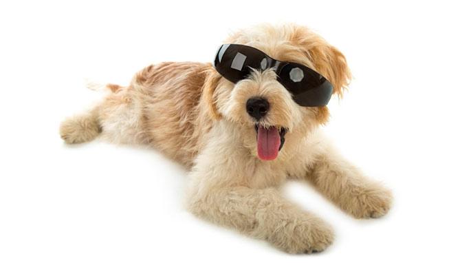 דלקת עיניים לכלב
