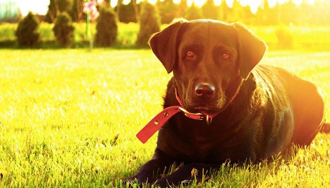 דלקת עיניים לכלב - וטרינר טירת כרמל