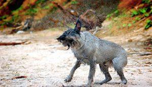 הקדימו לחסן נגד כלבת