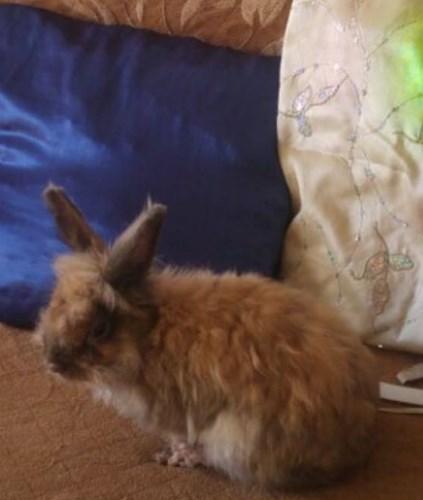 גידול ארנב דורש מאמץ