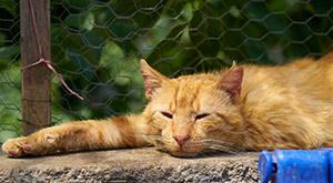 כלבת לחתולים - וטרינר בחיפה