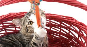 חיסונים לגורי חתולים - וטרינר בחיפה