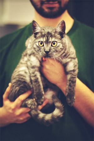 חיסון חתולים אצל וטרינר